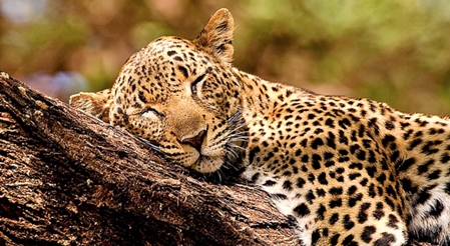Micato Safaris 3