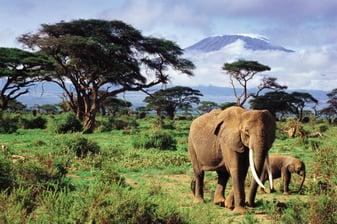 The Micato Grand Safari-1